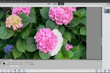 Remove a Background Using Photoshop Elements: A picture of a user removing a background using the Background Eraser Tool in Photoshop Elements.