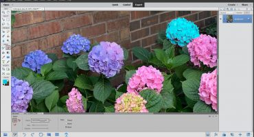 The Eraser Tool in Photoshop Elements - Instructions: A picture of a user applying the background color by using the Eraser Tool in Photoshop Elements.