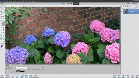 The Sponge Tool in Photoshop Elements - Instructions: A picture of a user increasing color saturation in a photo by using the Sponge Tool in Photoshop Elements.